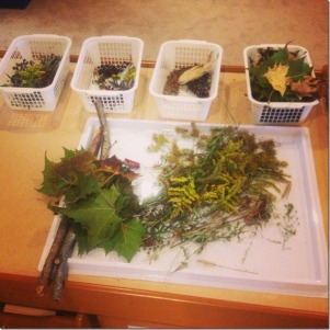 Collections from our nature walk
