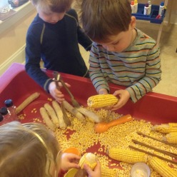 some of the students working hard to get the corn off of the cob