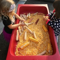 picking the corn kernels
